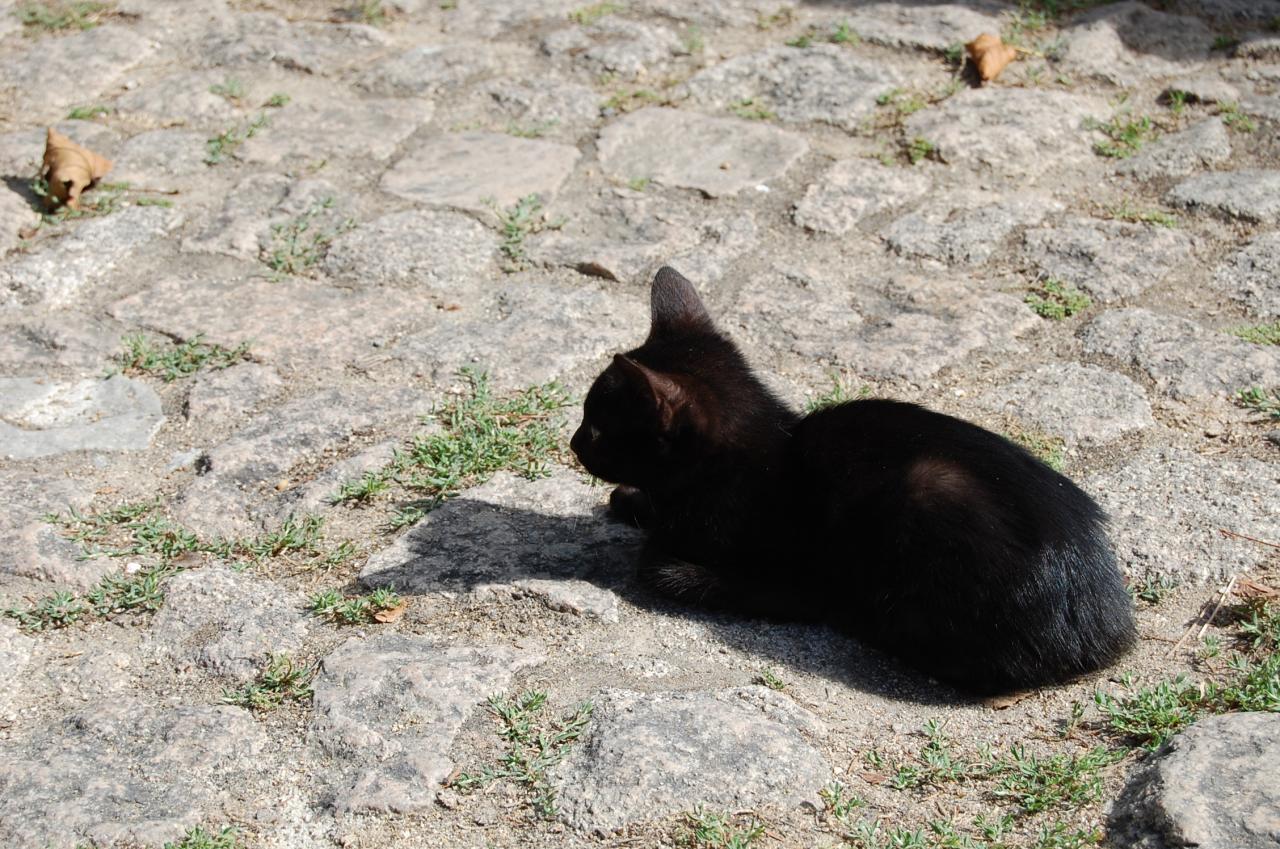 奶貓必讀! 千萬不要亂撿小貓,不小心撿到該怎辦?