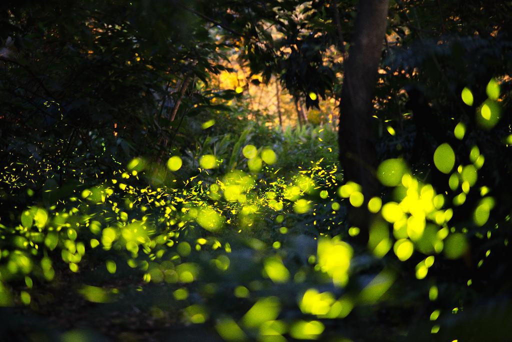 螢火蟲季節又來了!全台夢幻賞螢景點超值懶人包