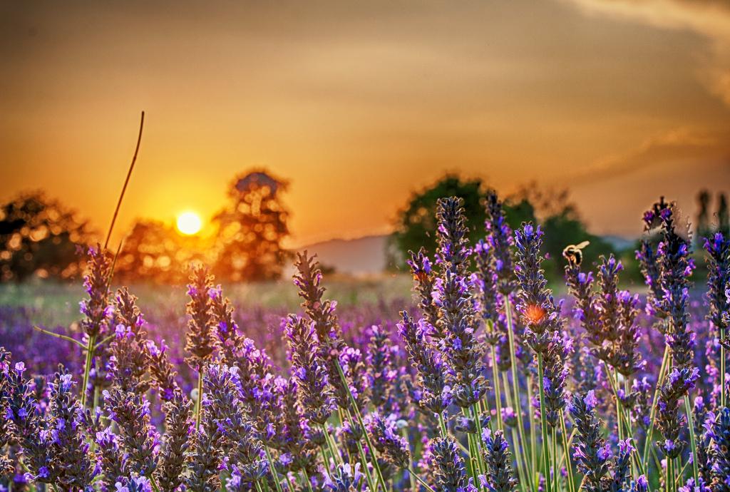 世界上最漂亮的十大美景,你去過哪幾個?