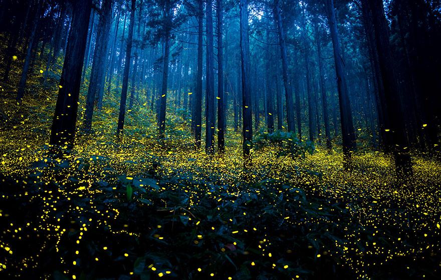 發現山林中舞動的美麗精靈☄Accupass帶你去北部最美的賞螢景點!(限量活動)