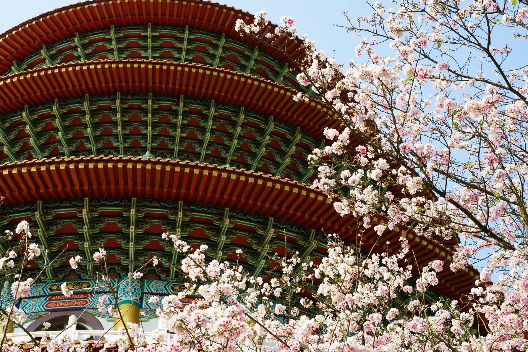 【台北微旅行】今年的櫻花晚了點,但感覺多了點|北部最強賞櫻勝地????無極天元宮萬櫻齊放