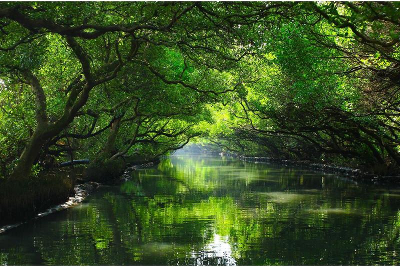 台灣也有亞馬遜河?【台南醉夢幻乘船體驗】乘坐竹筏穿越魔幻綠境!