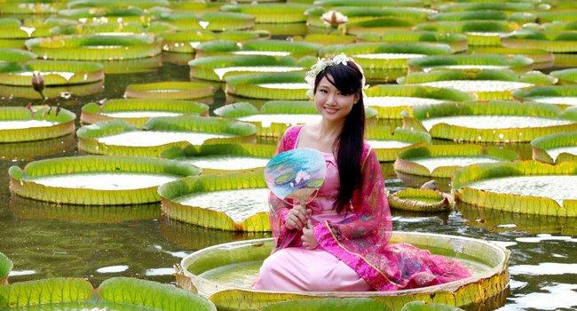 這不是武俠小說!雙溪「大王蓮花」奇幻漂浮 八月開放民眾乘坐!