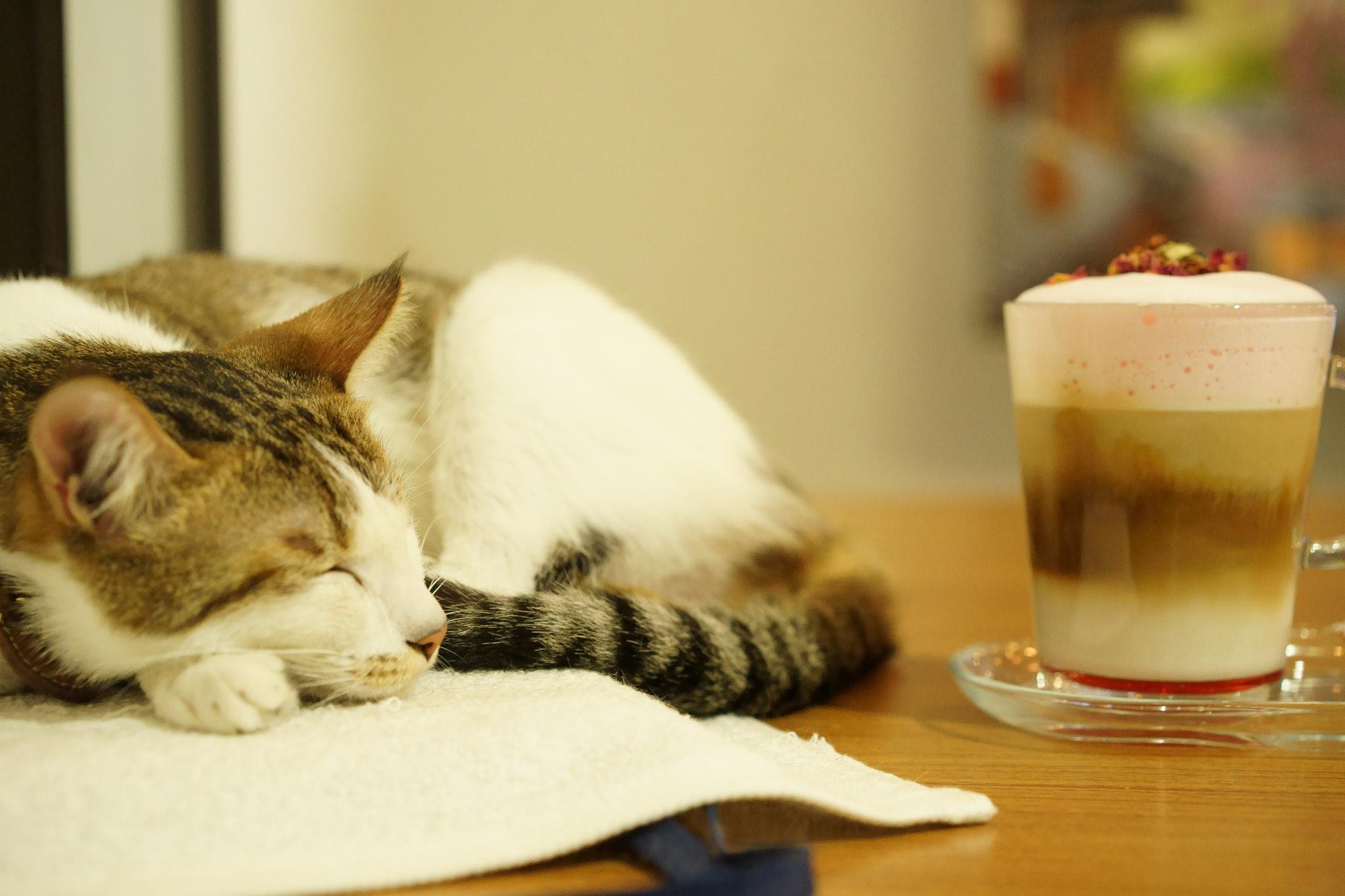 發現【貓咪文創咖啡】到「三貓小舖」 享受被喵星人包圍的下午!