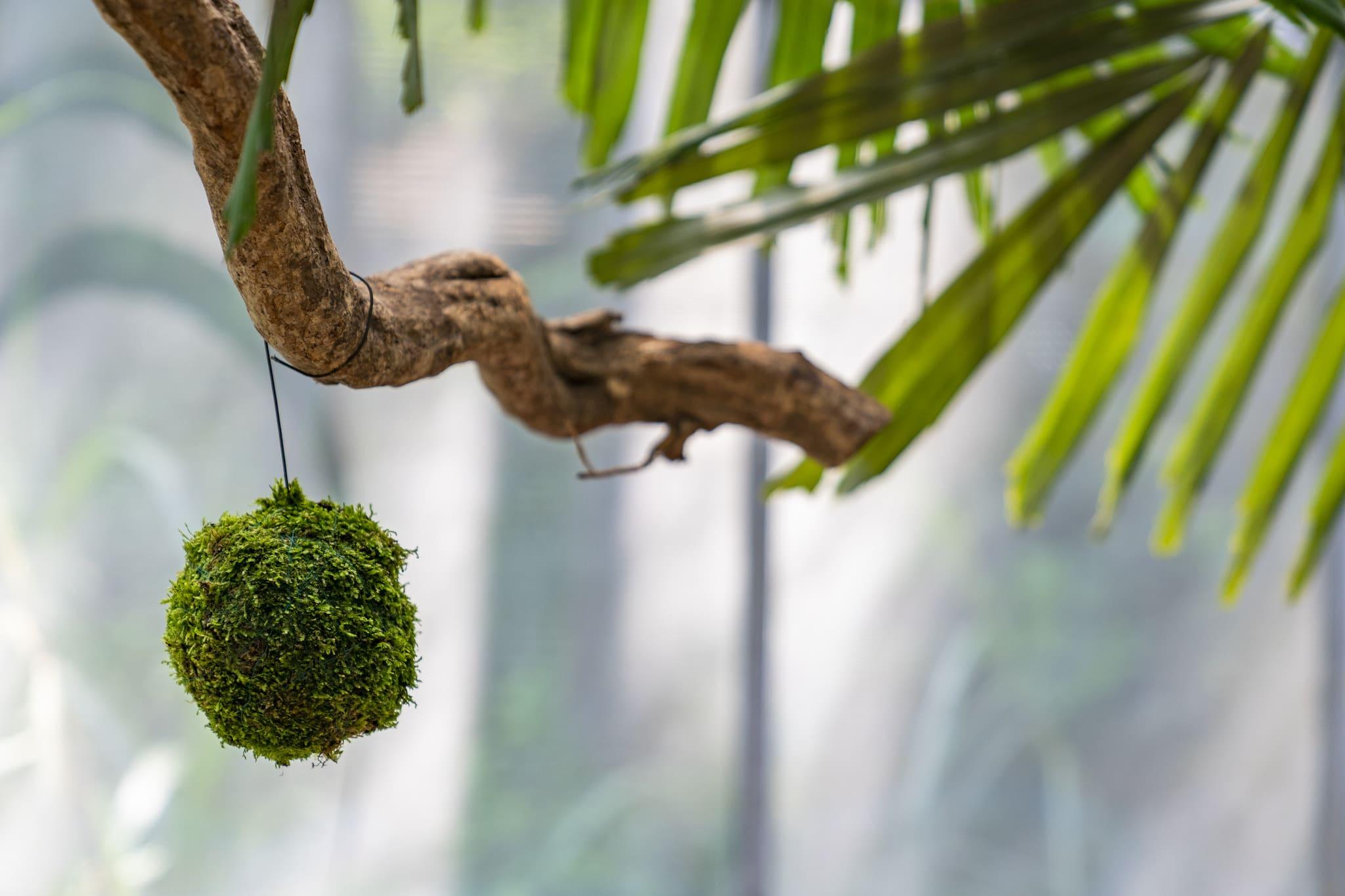 【勤美學×CN Flower】讓生活成為一種美學,走進香格里拉中的「森林大學」