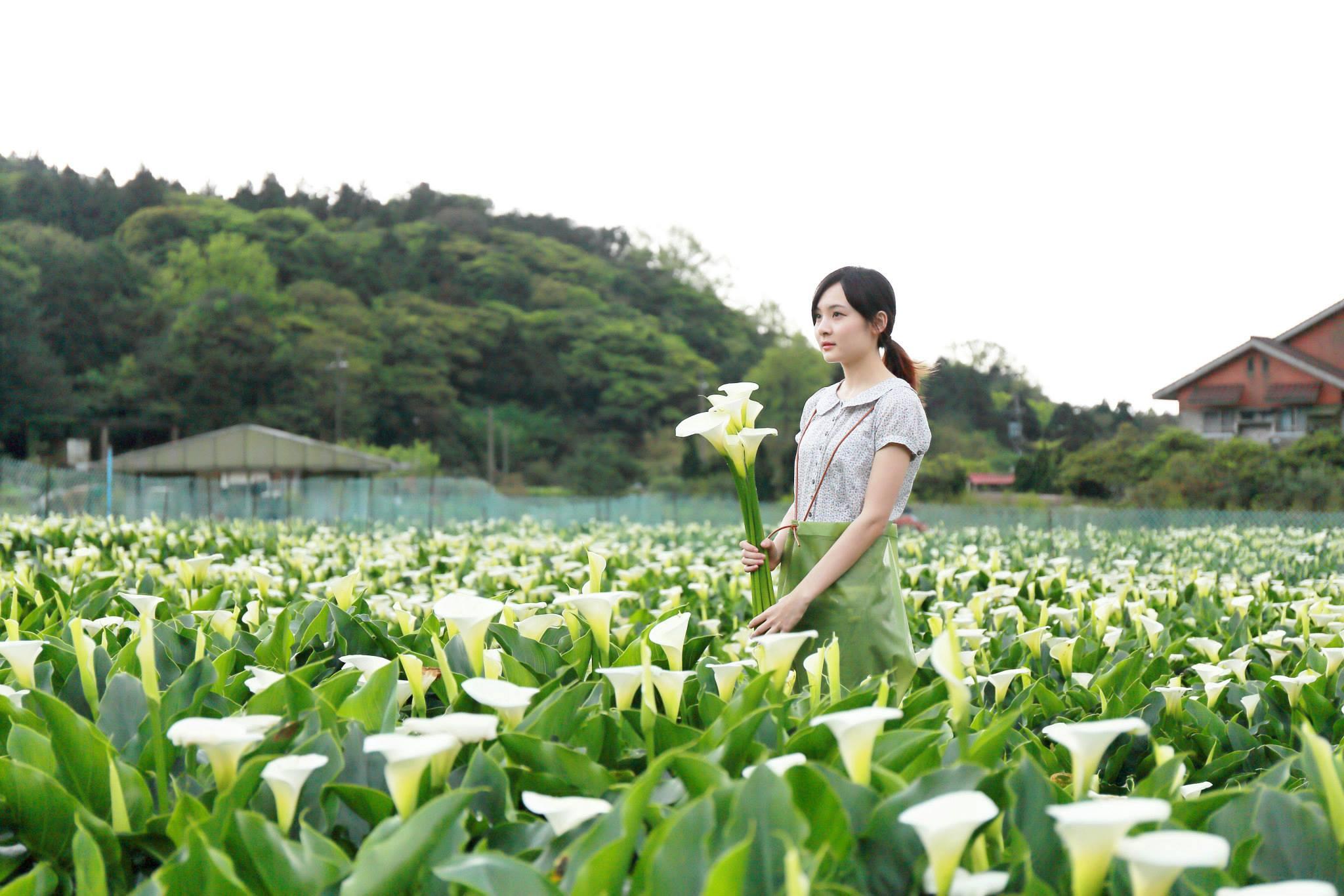 IG打卡季來臨│竹子湖海芋 繡球花滿山開???? 就等你來拍出屬於自己的獨特風格照!