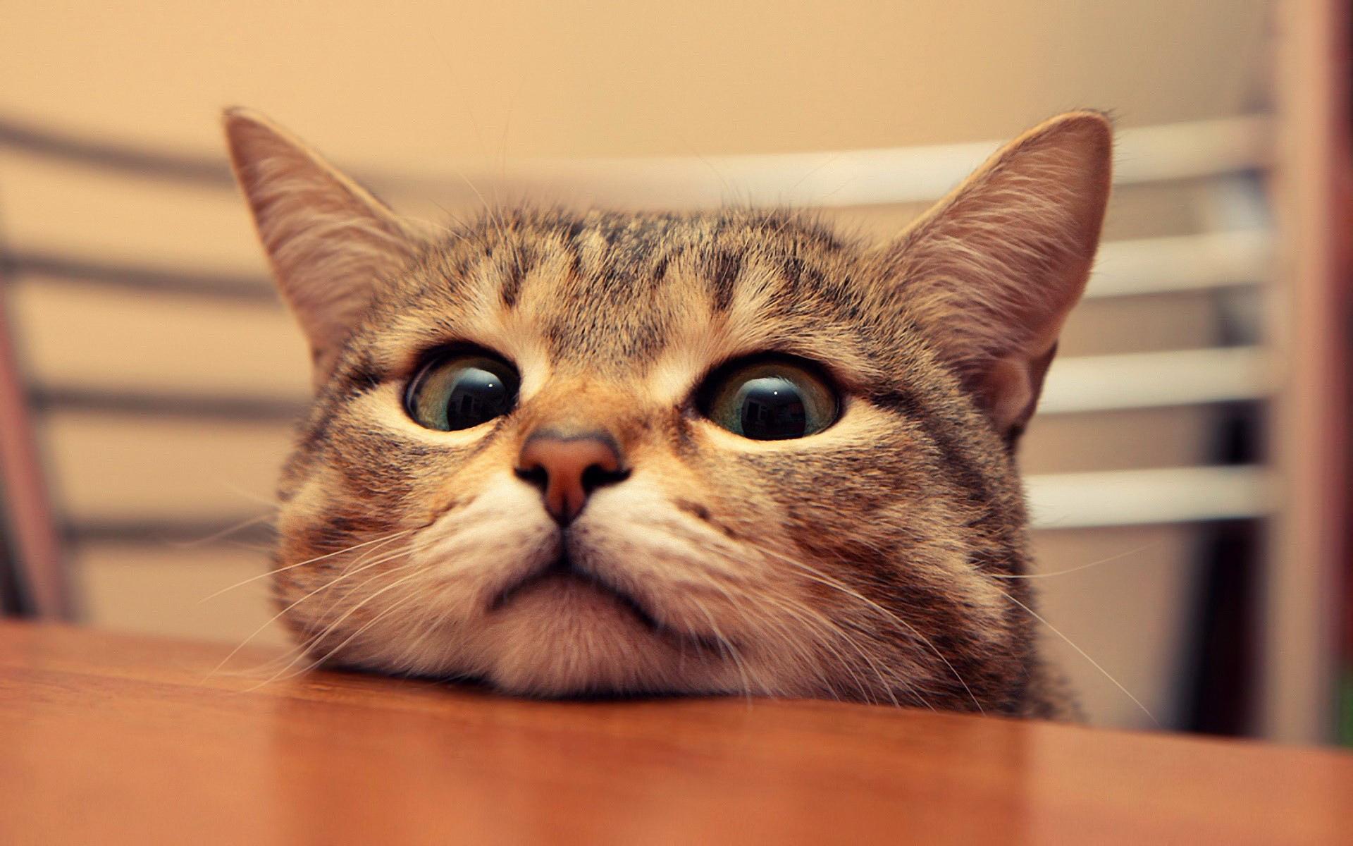 喵星人坐檯???? 貓奴必去的5間中途之家咖啡廳