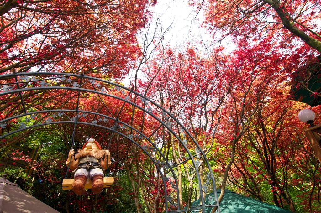 台灣5月竟能賞楓?陽明山何處5月竟能萬紫千紅!