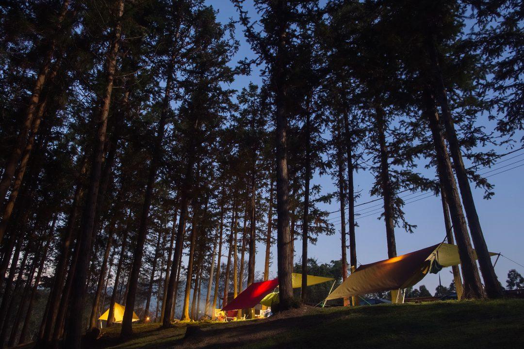 驚見全台最美露營地!【新竹超夢幻森林】連歐洲人都趨之若鶩!