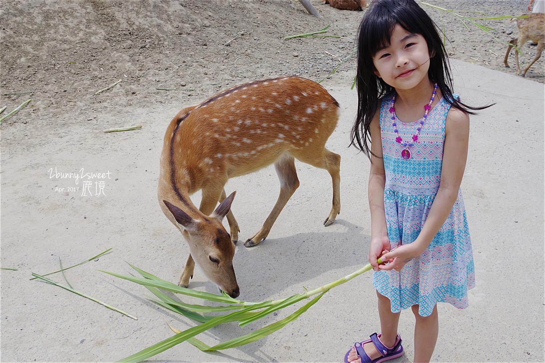 台灣也有超萌小鹿斑比!【墾丁小奈良】梅花鹿生態公園「鹿境」
