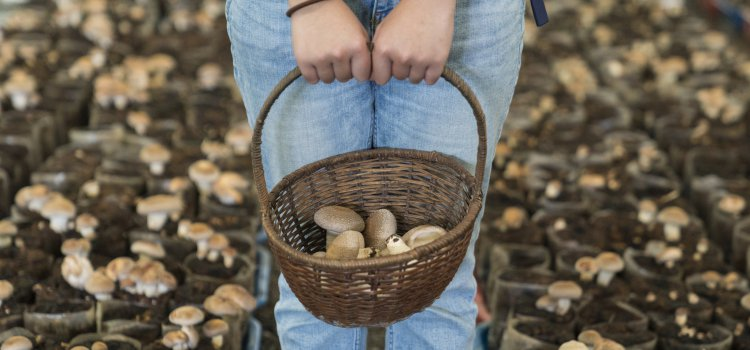 【OTOP 一鄉一特產】體驗採菇樂趣,2018 台中親子旅遊熱點「新社 – 百菇莊」。